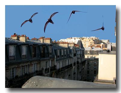 pariscapri1.jpg