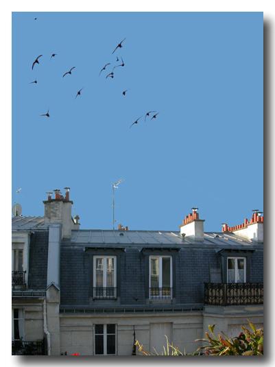 pariscapri2.jpg